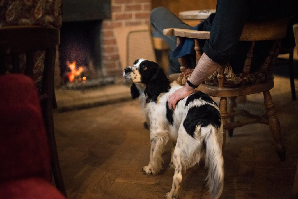 A Dog in Helen Browning's Royal Oak